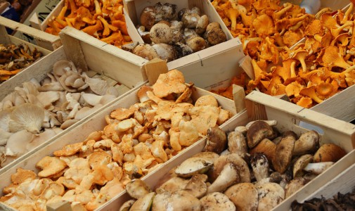 Decalogue of advice for mushroom pickers